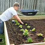 Raised garden beds - ABFOL
